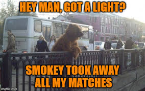 Smokey The Bear Meme - only you can prevent forest fires imgflip