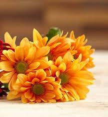 autumn flowers autumn season flowers indian blooms