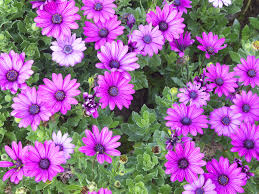 Fragrant Plants For Pots 8 Annuals That Are Perfect For Container Gardening