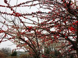 native plant solutions what is the prettiest plant in the winter native landscaping