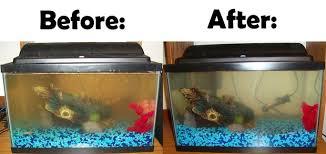 tank let s clean it up 10 steps