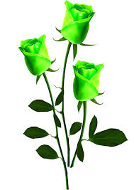 green roses green roses stock photo flowers stock photo free