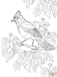 jay coloring pages free coloring pages