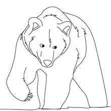 grizzly bear coloring pages hellokids