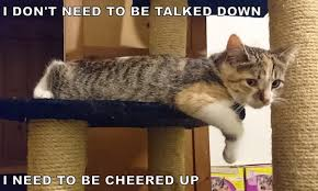 Funny Cheer Up Meme - i can has cheezburger cheer up funny animals online cheezburger