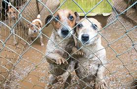 a closer look at puppy mills aspca