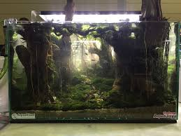 Aquascapes Game Play Online 297 Best Aquascapes Images On Pinterest Aquascaping Aquarium