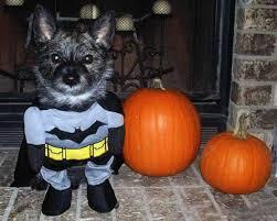 halloween dog costume gadget flow