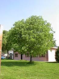 albero giardino da giardino e per parchi