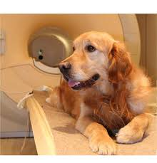 state with most dog owners 2016 your dog really does know what you u0027re saying and a brain scan