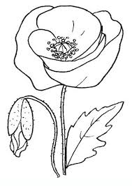 36 best poppy images on pinterest crafts daycare ideas and drawing