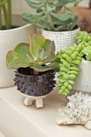300 best plant decor images on pinterest plant decor apartment