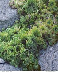 Rock Garden Succulents Rock Garden Primer Finegardening