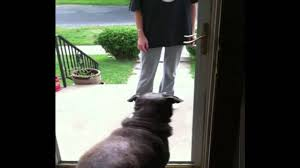 through the glass dog doors dog won u0027t go through door missing glass youtube