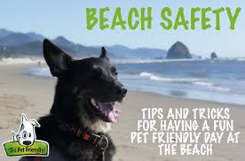 beachsafety png