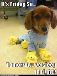 Its Friday Funny Meme - it s friday so tomorrow we sleep in right dump a day