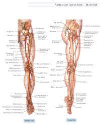 Human Body Anatomy Pics Human Body Back View Anatomy Human Anatomy Chart