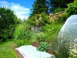 Urban Permaculture Design Your Own Backyard Oasis Out There Monthly - Backyard permaculture design