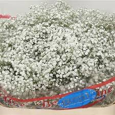 wholesale flowers online gypsophila buy online wholesale flowers wedding flowers