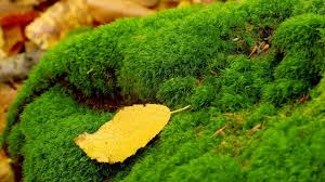 what is moss garden how to create caring tips youtube