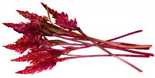 Edible Flowers Edible Flowers Firestix Sparklers Microflower Blend Freshorigins