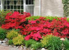 In Front Yard - landscaping shrubs ideas using azalea in the front yard front