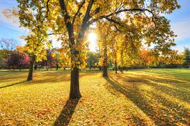 yellow park with trees wallpaper nature and landscape