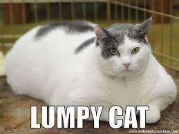 Fat Cat Meme - fat cat amish baby machine podcast