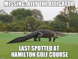 Alligator Meme - after an entire week ally the alligator the hagerstown report