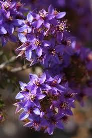 plants native to australia 43 best wild flowers of western australia images on pinterest