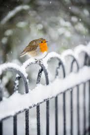 99 best vogels in de winter images on pinterest diy animals and