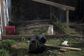 cats in the wildlife garden can they have their cake and catio