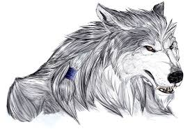drawn face werewolf pencil and in color drawn face werewolf