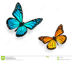 images for blue monarch butterfly drawing tattoos