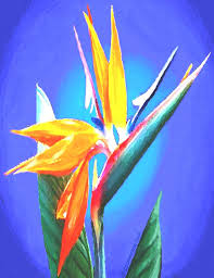 birds of paradise flower bird of paradise flower painting by schmierer