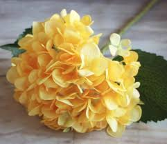yellow flowers top 25 most yellow flowers in the world meaning seasonal and