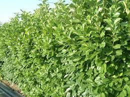 societa agricola nannini vasco e f lli outdoor ornamental plants