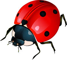 Unlucky Things It Is Bad Luck To Kill A Ladybug Old Wives U0027 Tales