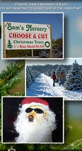 sam u0027s nursery choose and cut christmas tree christmas tree