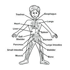 body parts coloring pages for toddlers preschool new glum me