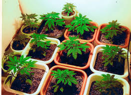 seeds 101 how to germinate and sprout your seeds