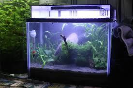 Nano Aquascaping Aquascaping A Nano Shrimp Tank 12 Litres Kierans Fish