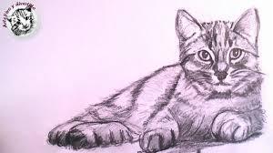 Imagenes A Lapiz De Gatos | como dibujar un gato realista a lapiz paso a paso youtube