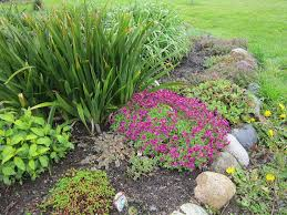 top 10 rock garden plants garden pics and tips