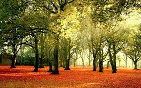 trees forest autumn nature landscape tree image high quality