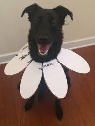 diy dog halloween costume 6 diy halloween costumes you can make for your pet out of moving