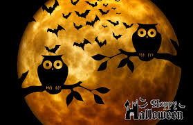 Halloween Owl Pictures 10 Interesting Facts About Halloween America Trending