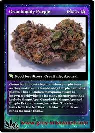 buy edible cannabis online 14 best marijuana strains and effects 2k17goals images on