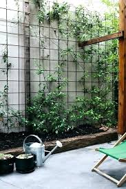 Garden Privacy Screen Ideas Best Plant For Privacy Screen Garden Privacy Screen Best Garden