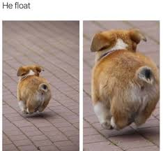 Corgi Puppy Meme - he float puppy meme